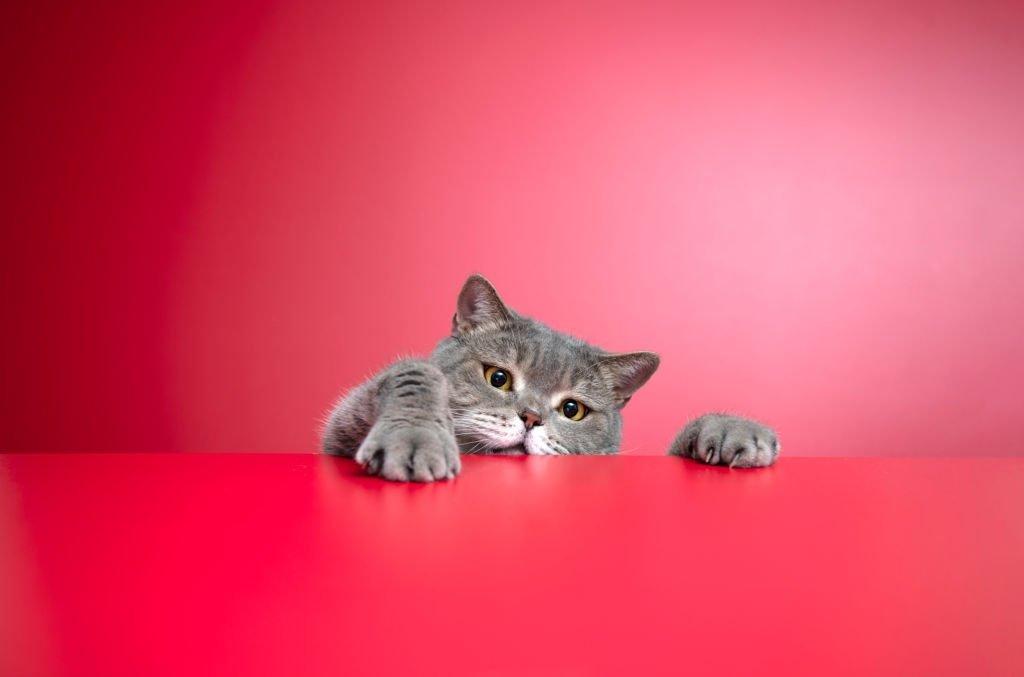 Dream Of Gray Cat