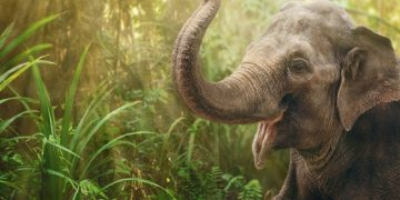 Elephant – Dream Meaning and Symbolism 8