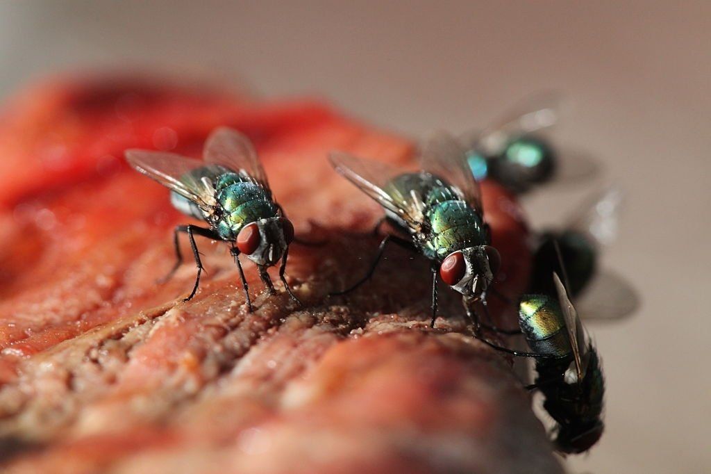 Fly In Food