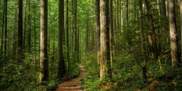 Forest – Dream Meaning and Symbolism 14