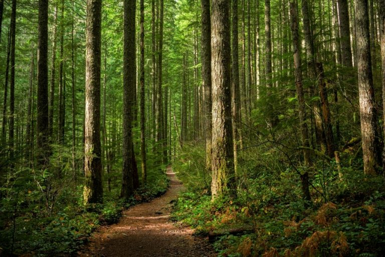 Forest – Dream Meaning and Symbolism 1