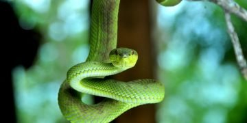 Green Snake – Dream Meaning and Symbolism 82