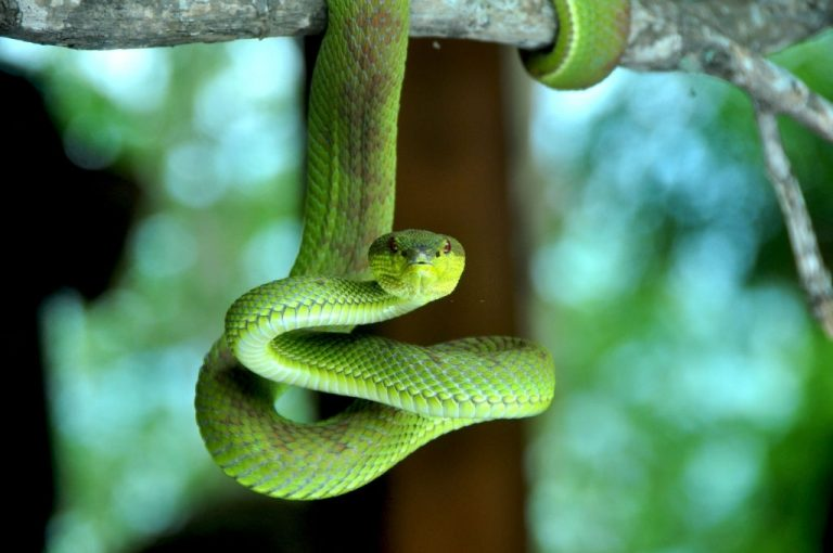 Green Snake – Dream Meaning and Symbolism 1