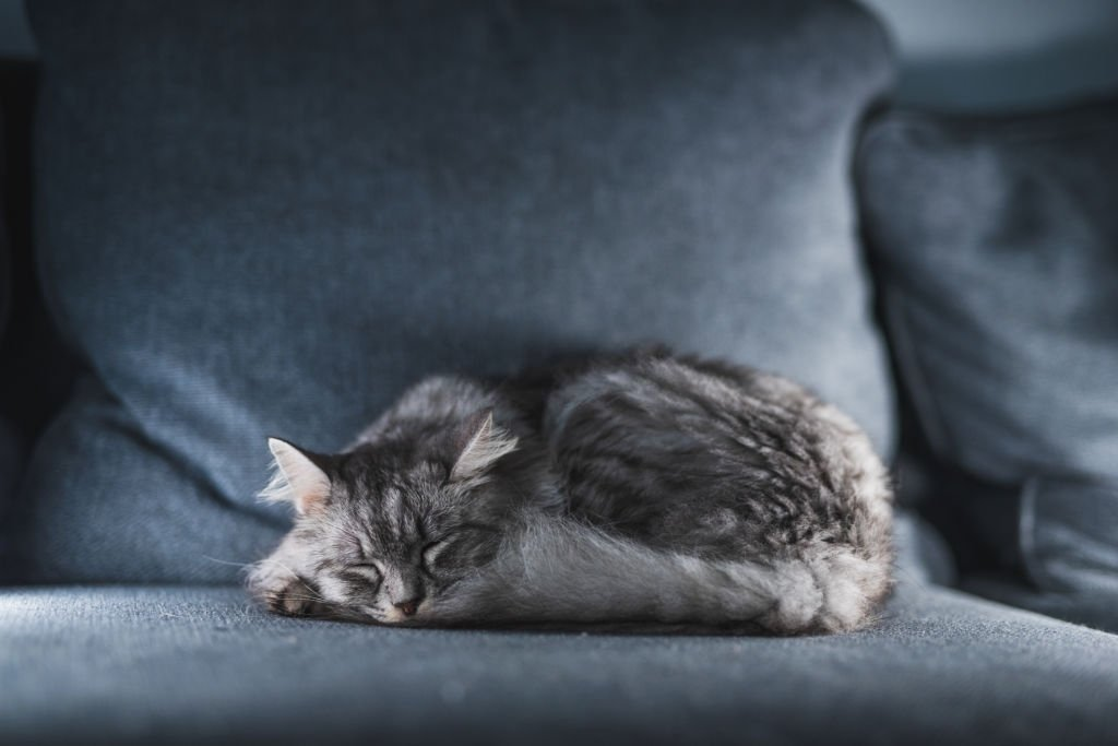 Gray Cat – Dream Meaning and Symbolism 4