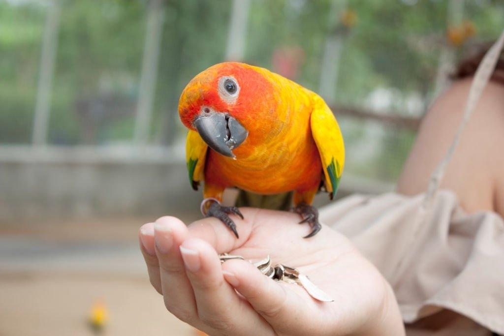 Holds A Parakeet