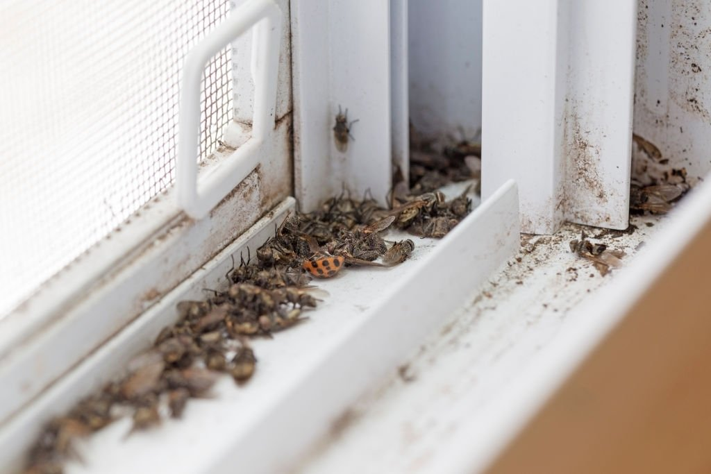 Insects Through The House