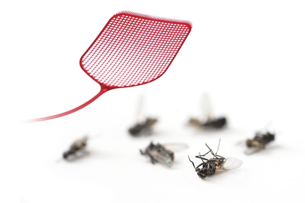 Kills A Fly