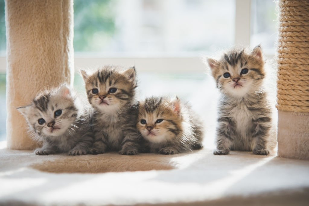 Lot Of Kitten
