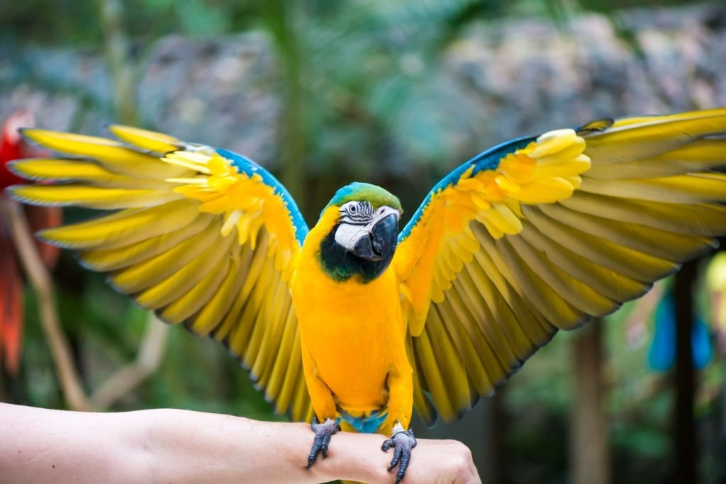 Macaw In Hand