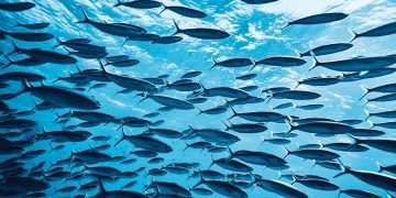 Many Fish – Dream Meaning and Symbolism 44