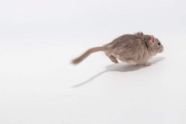 Mouse Running – Dream Meaning and Symbolism 1