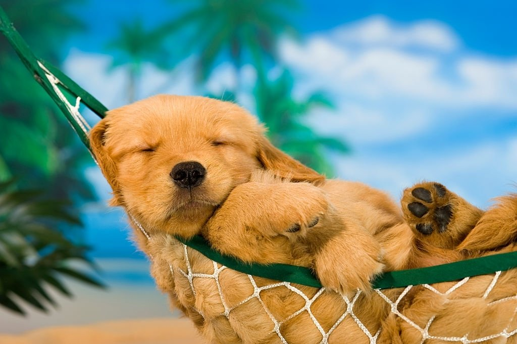 Puppy – Dream Meaning and Symbolism 6