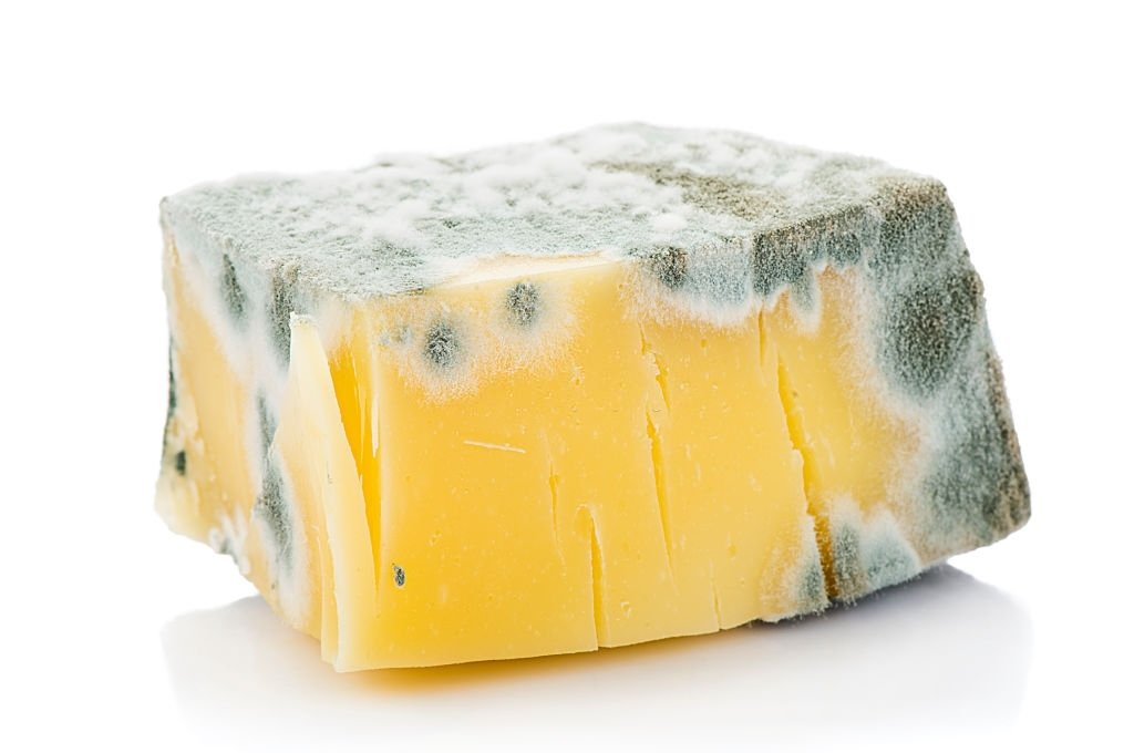 Rotten Cheese