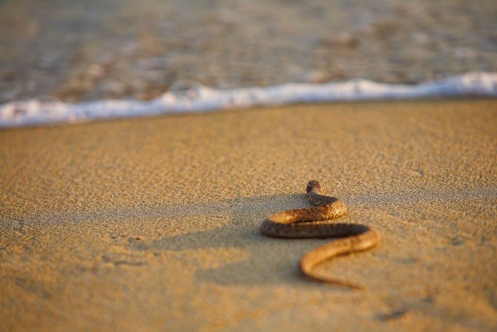 Serpiente marrón - Significado y simbolismo del sueño 4