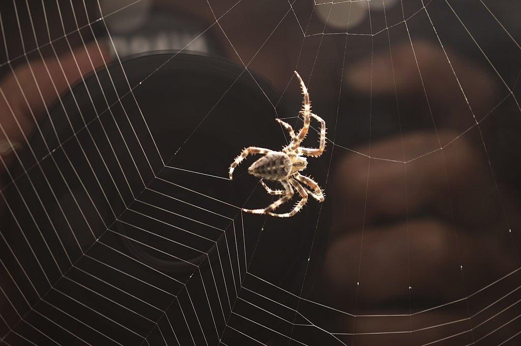 Tela De Araña – Significado Y Simbolismo De Los Sueños 3