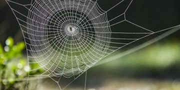 Spider Web – Dream Meaning and Symbolism 30