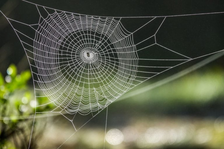 Spider Web – Dream Meaning and Symbolism 1