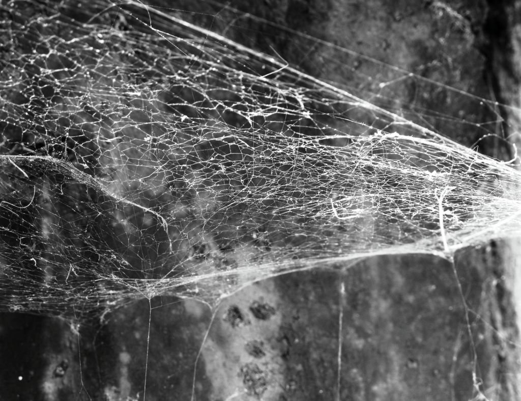Spider Web On The Wall