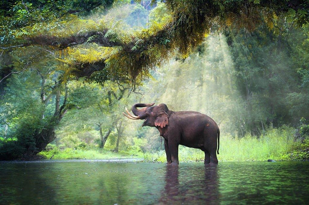 Elefante – Significado Y Simbolismo De Los Sueños 3