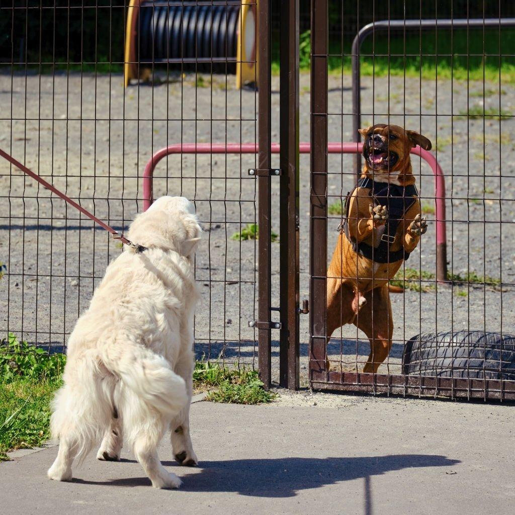 White Dog Attacking