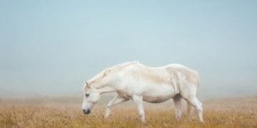 White Horse – Dream Meaning and Symbolism 10