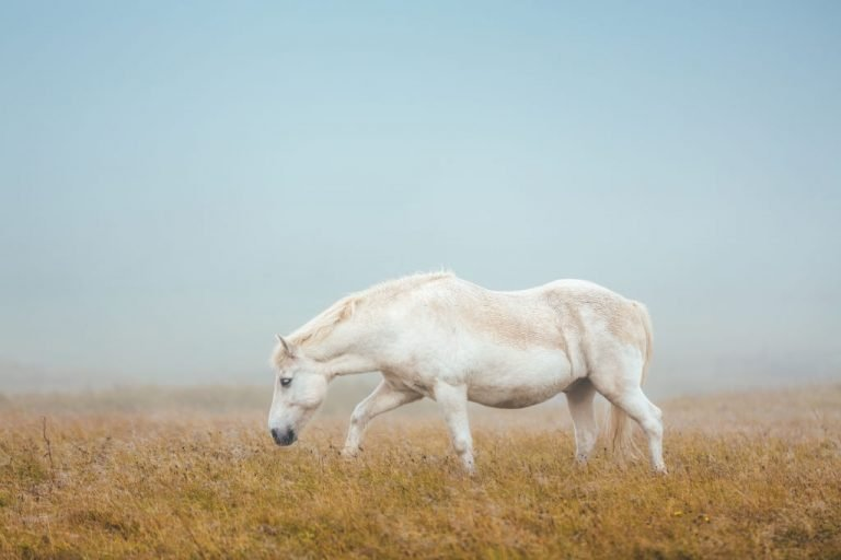 White Horse – Dream Meaning and Symbolism 1