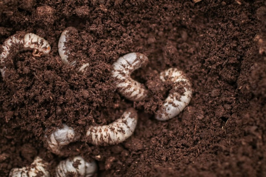 Worms – Dream Meaning and Symbolism 5
