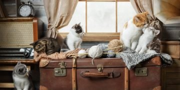 Many Cats – Dream Meaning and Symbolism 28