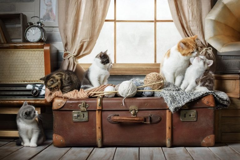 Many Cats – Dream Meaning and Symbolism 1