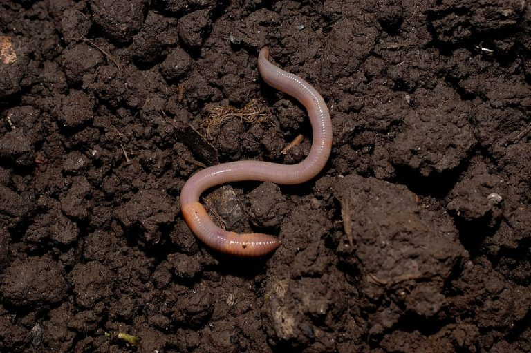 Worms – Dream Meaning and Symbolism 1