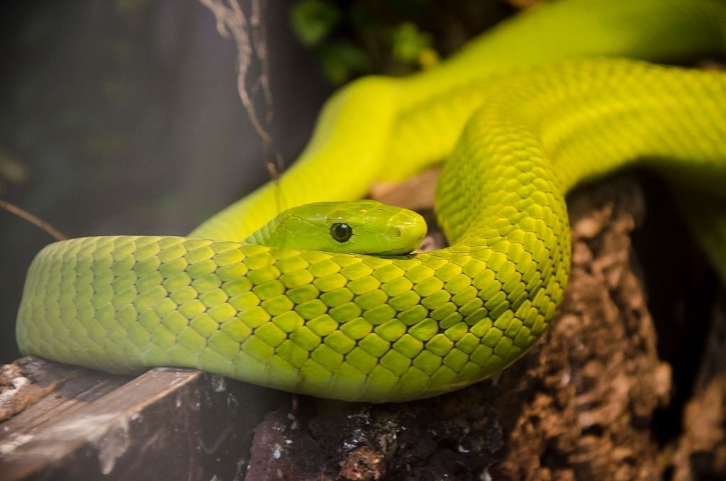 Green Snake – Dream Meaning and Symbolism 5