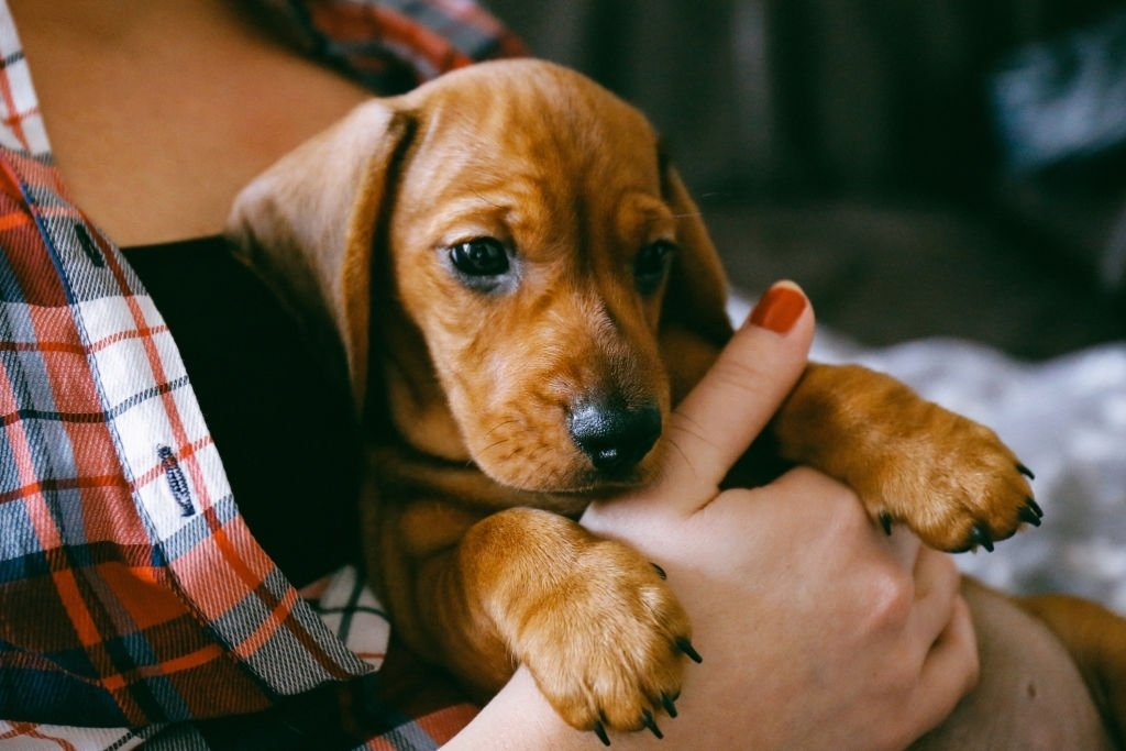 Puppy – Dream Meaning and Symbolism 3