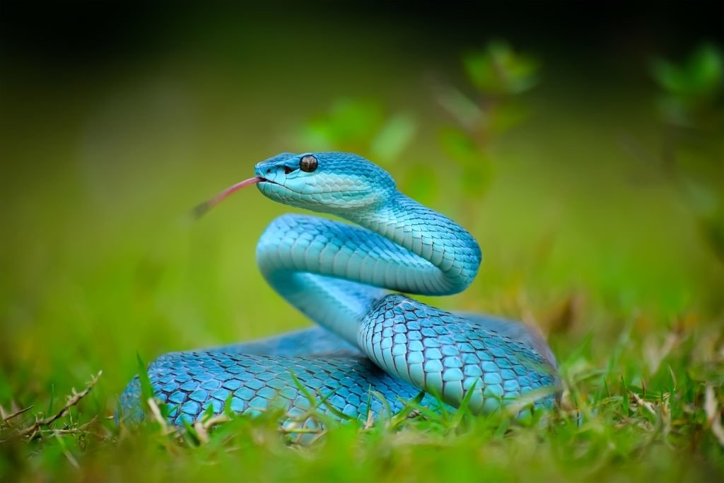 You See A Blue Snake
