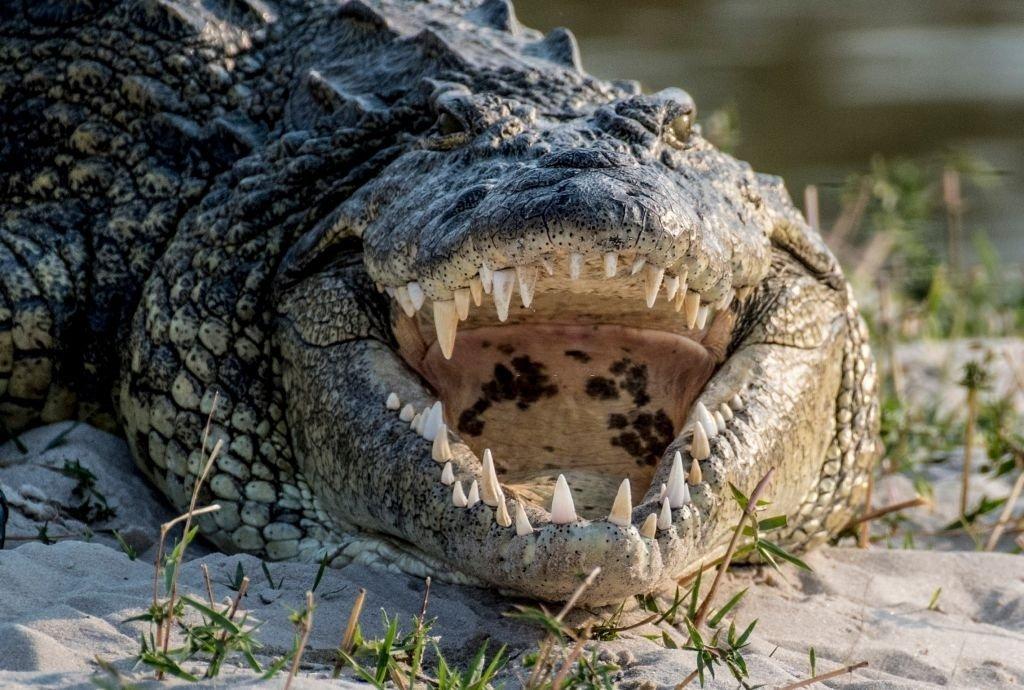 You See A Crocodile