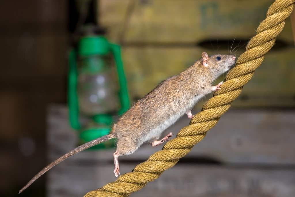 You See A Running Mouse