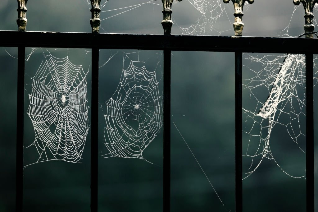 You See A Spider Web