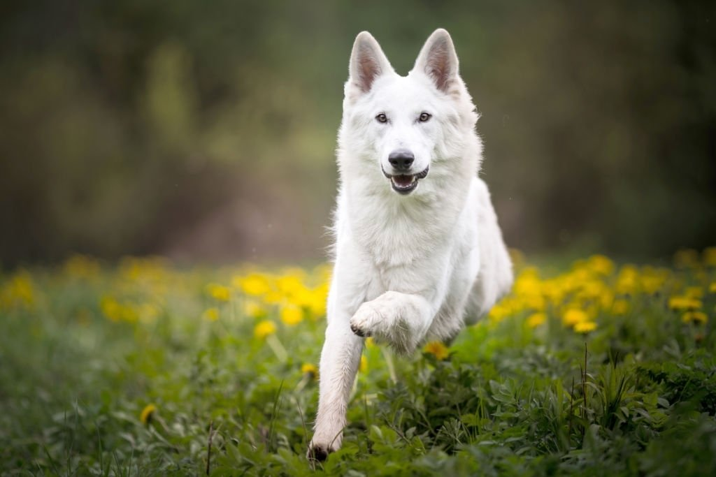You See A White Dog